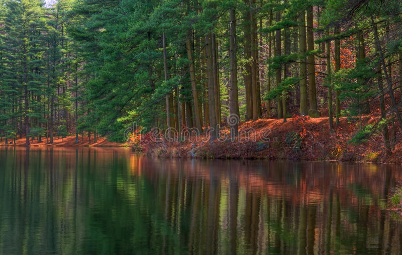 Download Forest Shoreline Reflections Stock Images - Image: 11870624