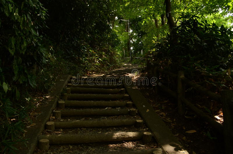 Forest Sidewalk at Yaho Japan royalty free stock photo