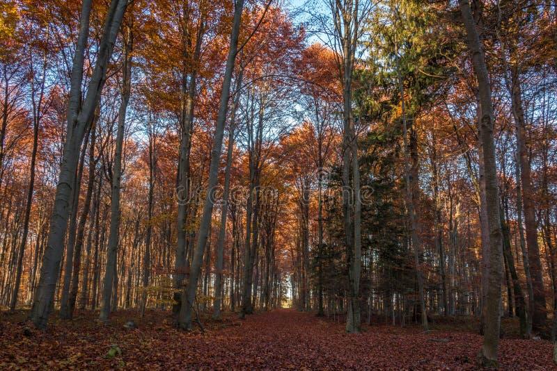 Forest Siebentischwald το φθινόπωρο, Augsburg, Swabia, Βαυαρία, Γερμανία στοκ φωτογραφία