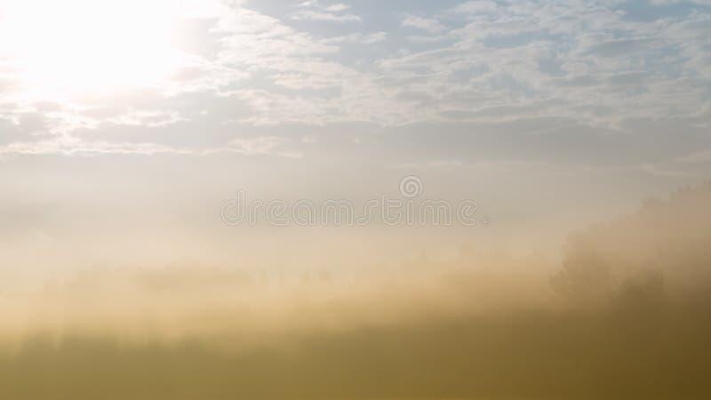 Forest silhouette peeking through heavy fog. royalty free stock image