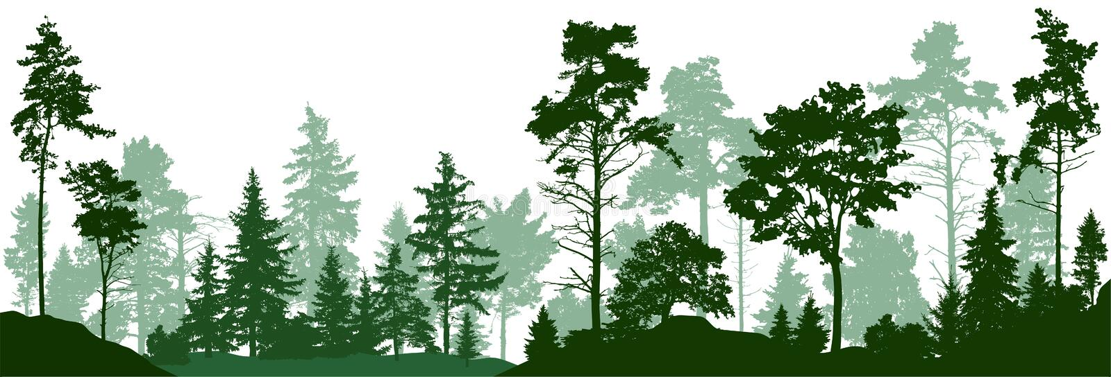 Forest silhouette trees. Evergreen coniferous forest with pines, fir trees, christmas tree, cedar, Scotch fir. Vector vector illustration