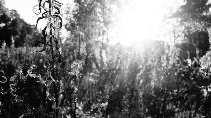 Forest_001 imagen de archivo libre de regalías