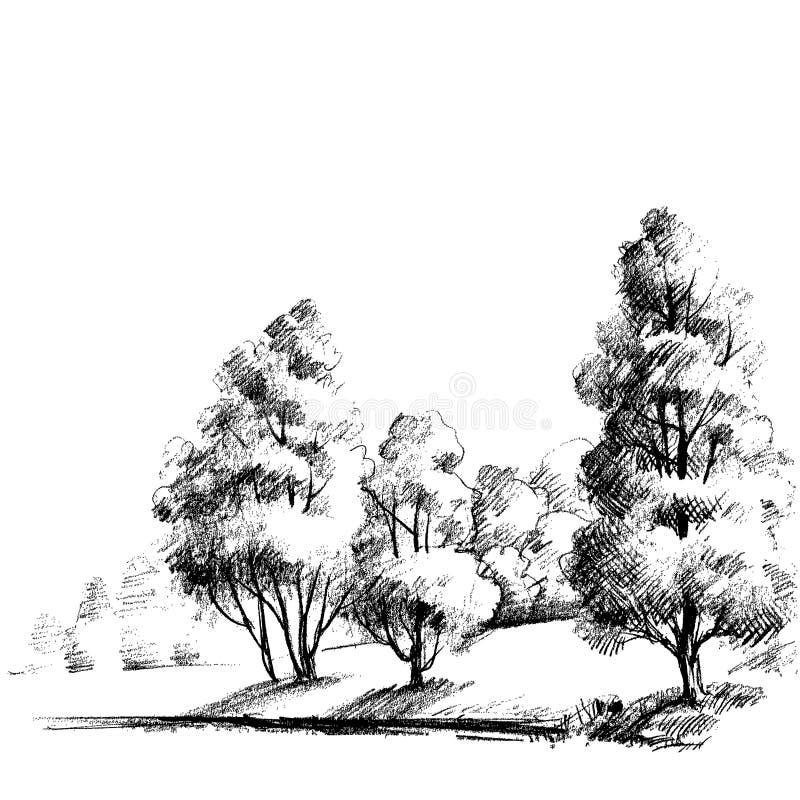 Line Art Forest : Forest sketch stock vector illustration of draw black