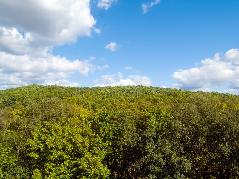 Download Forest and sky landscape stock image. Image of paradise - 3611159