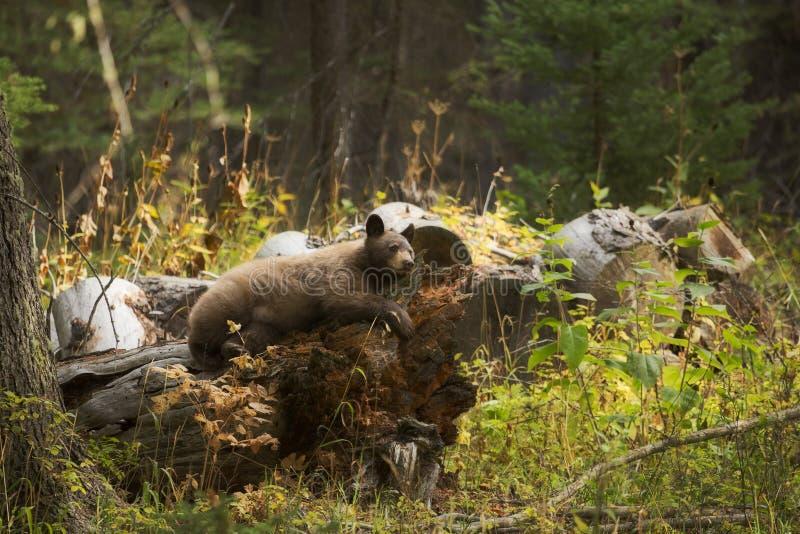 Forest Slumber royalty-vrije stock fotografie