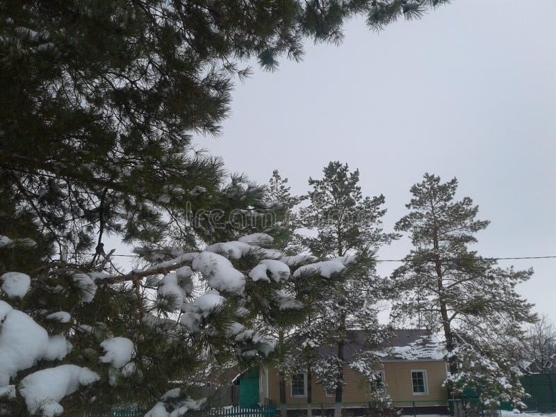 Forest Snow imagem de stock