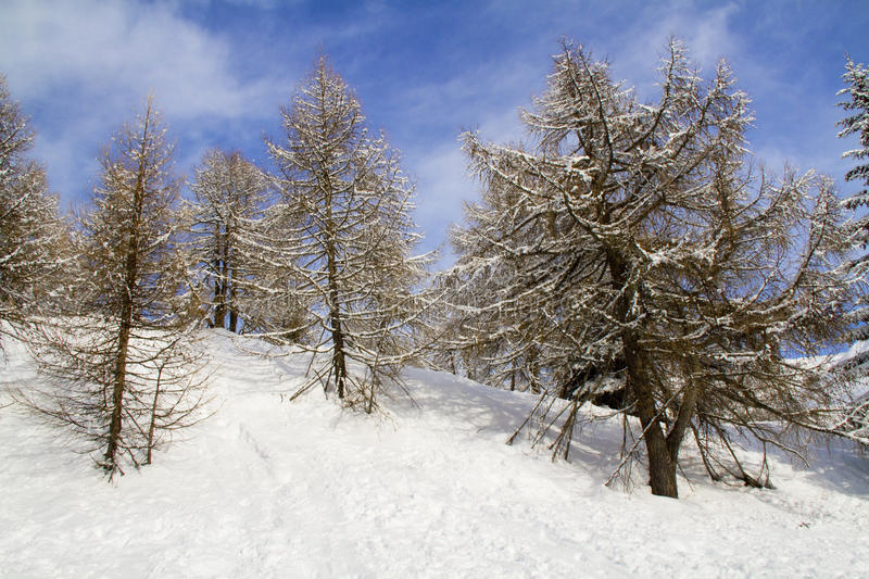 Download Forest with snow stock image. Image of white, peaceful - 12352975