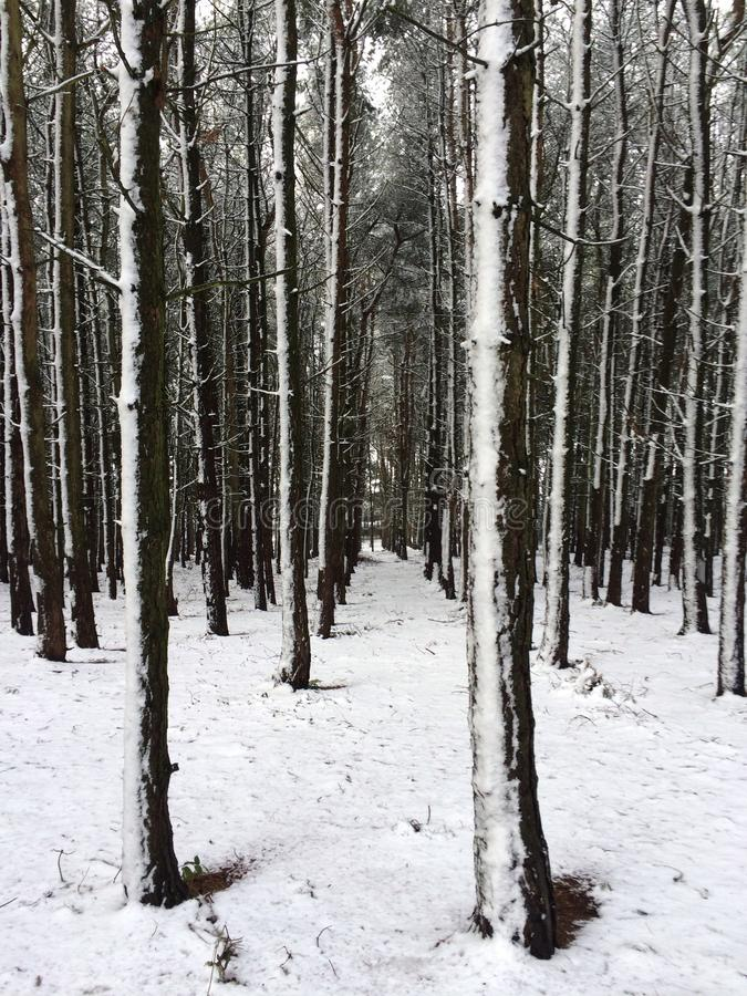 Forest Snow images stock