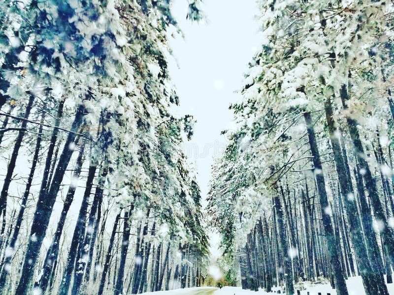 Forest and snow royalty free stock photos
