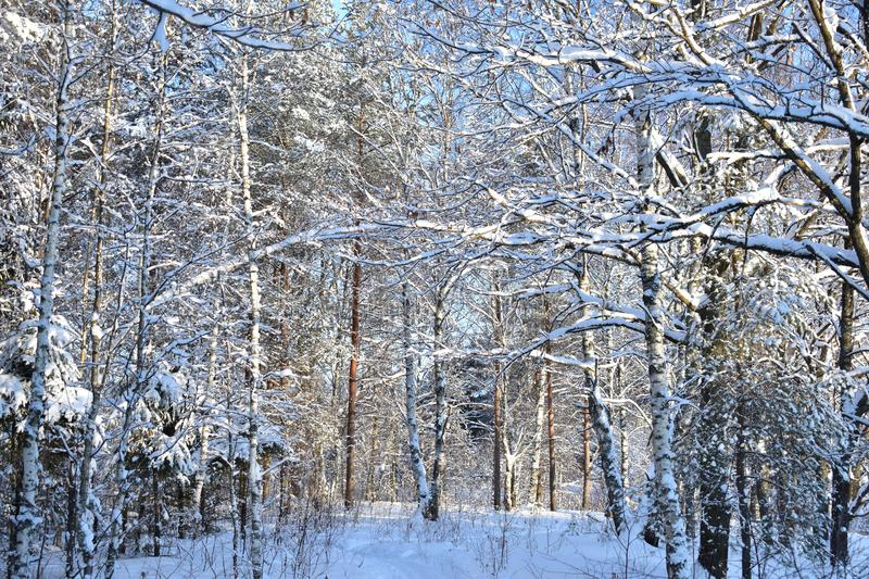 The forest is always something mysterious and fabulous, and even in winter even more so stock images
