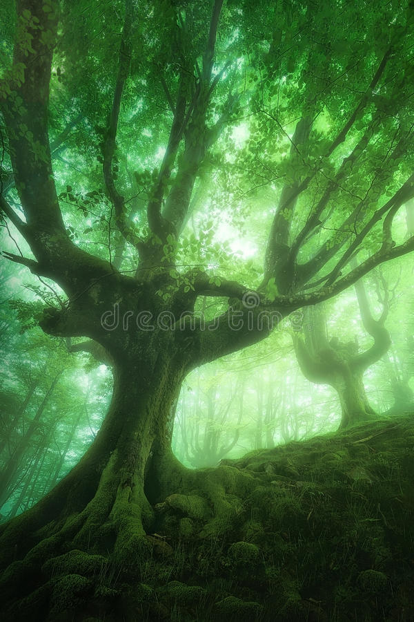 Forest in spring royalty free stock photos