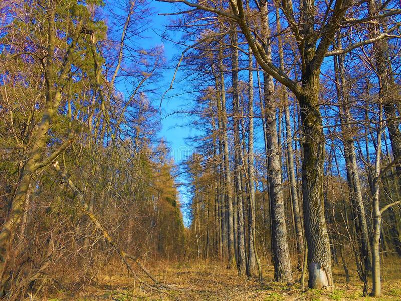 Forest in spring. stock images