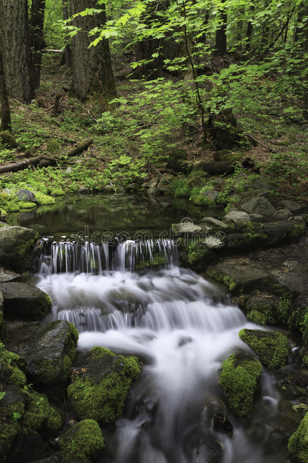 Forest spring in Yosemite Valley stock image
