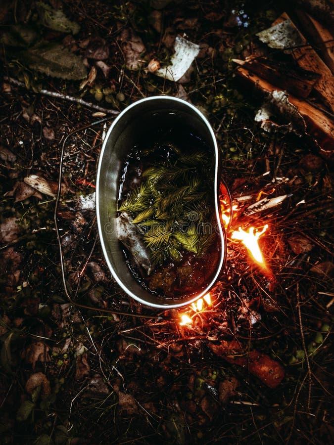 Forest Spruce Tea, Kiefern-Tee, Kampieren, im Freien lizenzfreies stockbild