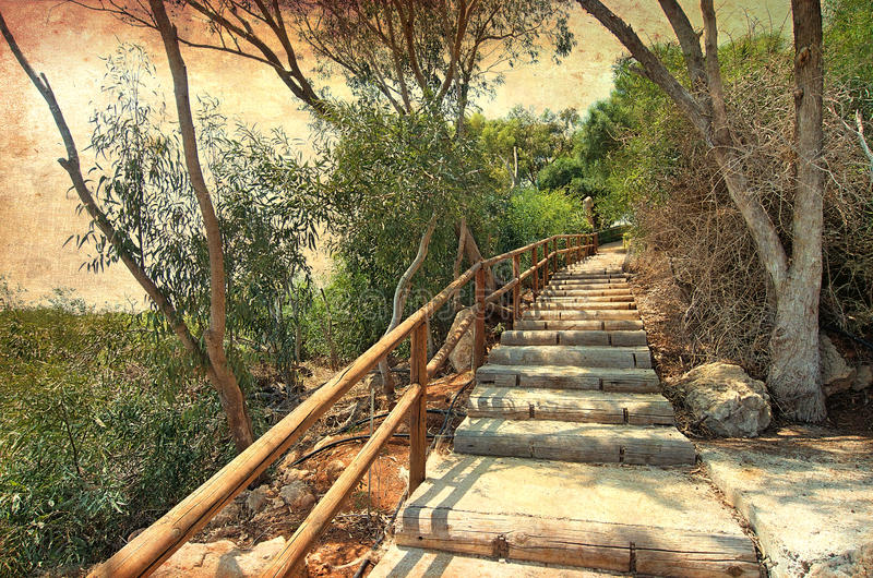 Forest stairs to the heaven royalty free stock photography