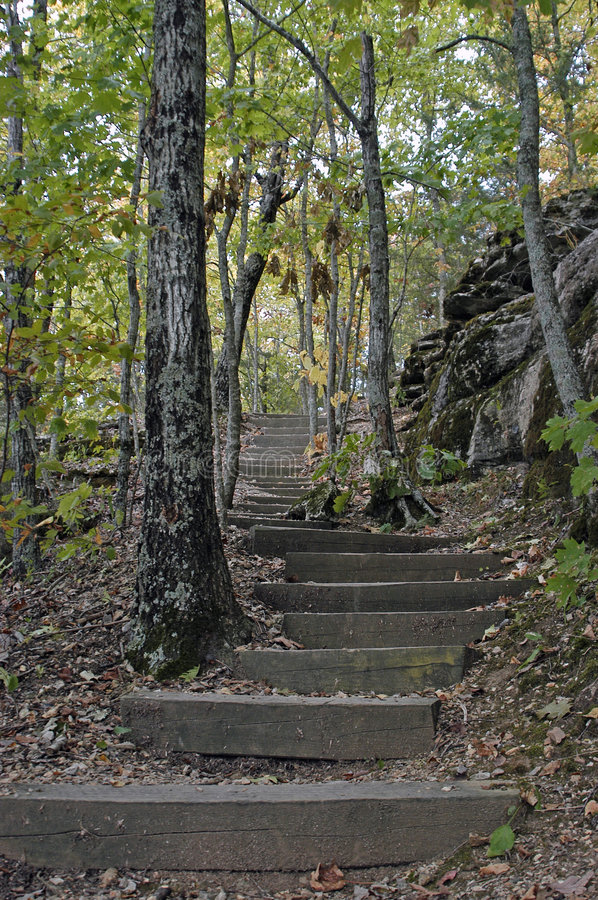 Free Forest Stairway Stock Photography - 1699052