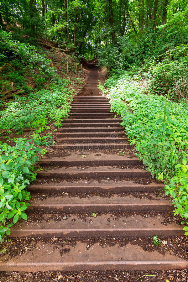 Free Forest Stairway Stock Photo - 35130040