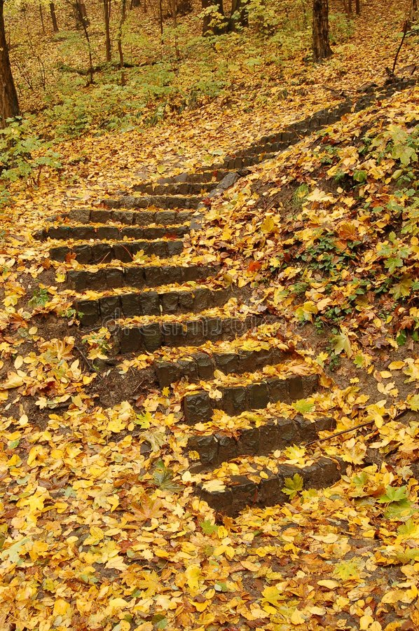 Free Forest Stairway Royalty Free Stock Photo - 3570435