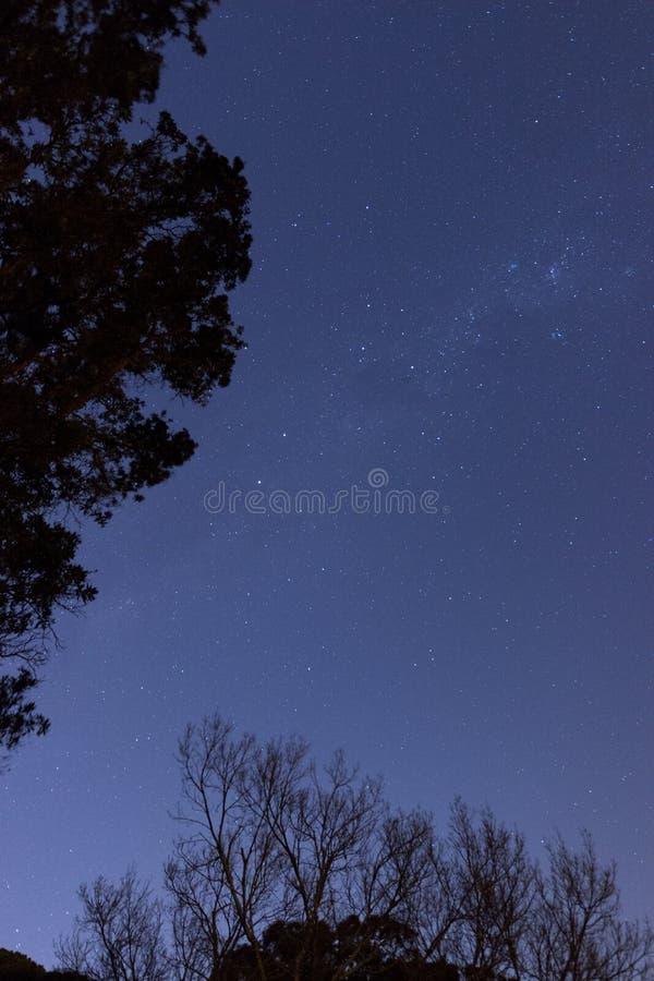 Forest Stars fotografia stock