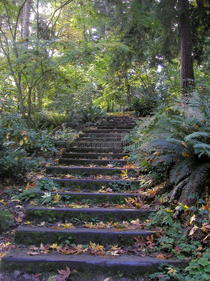 Forest Steps stock photo