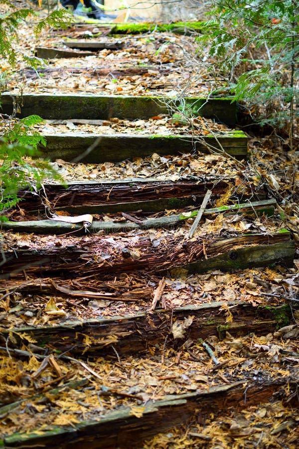 Forest Steps imagens de stock