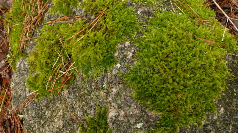 Forest Stone with moss royalty free stock photography