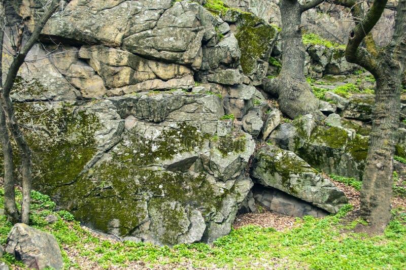 Forest Stones trevlig naturbakgrund arkivbilder