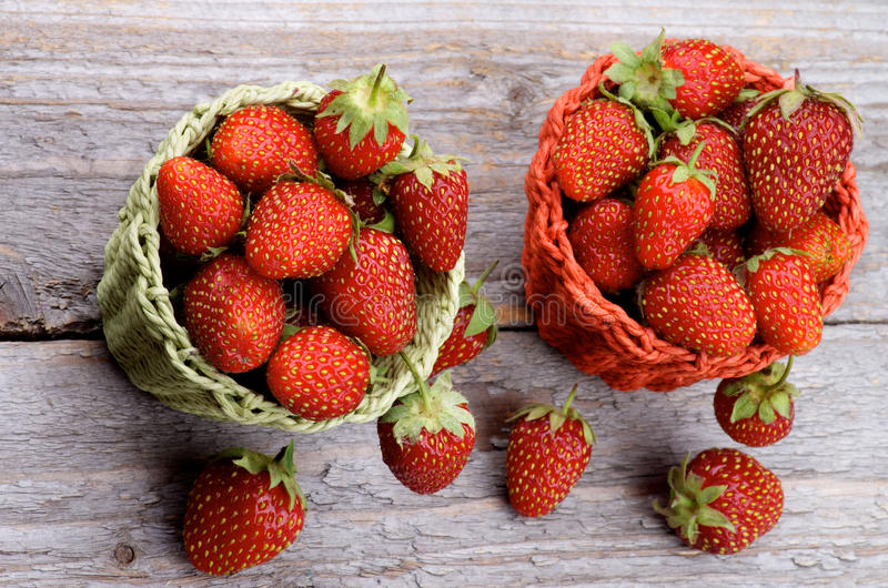 Forest Strawberries fotografia de stock