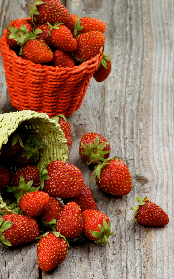 Forest Strawberries imagem de stock