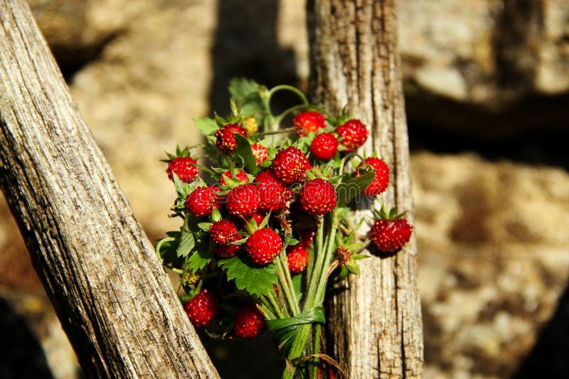 Forest strawberries on an old wooden wheel stock photo