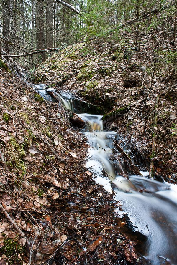 Forest Stream fotografía de archivo
