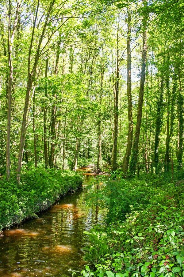 Forest Stream fotos de stock
