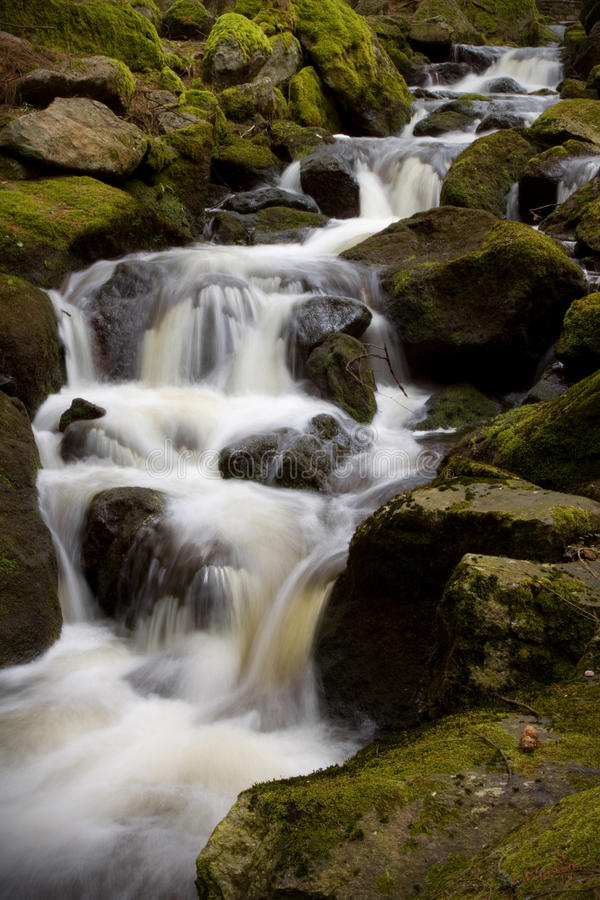 Download Forest stream stock photo. Image of fountain, environment - 14023500