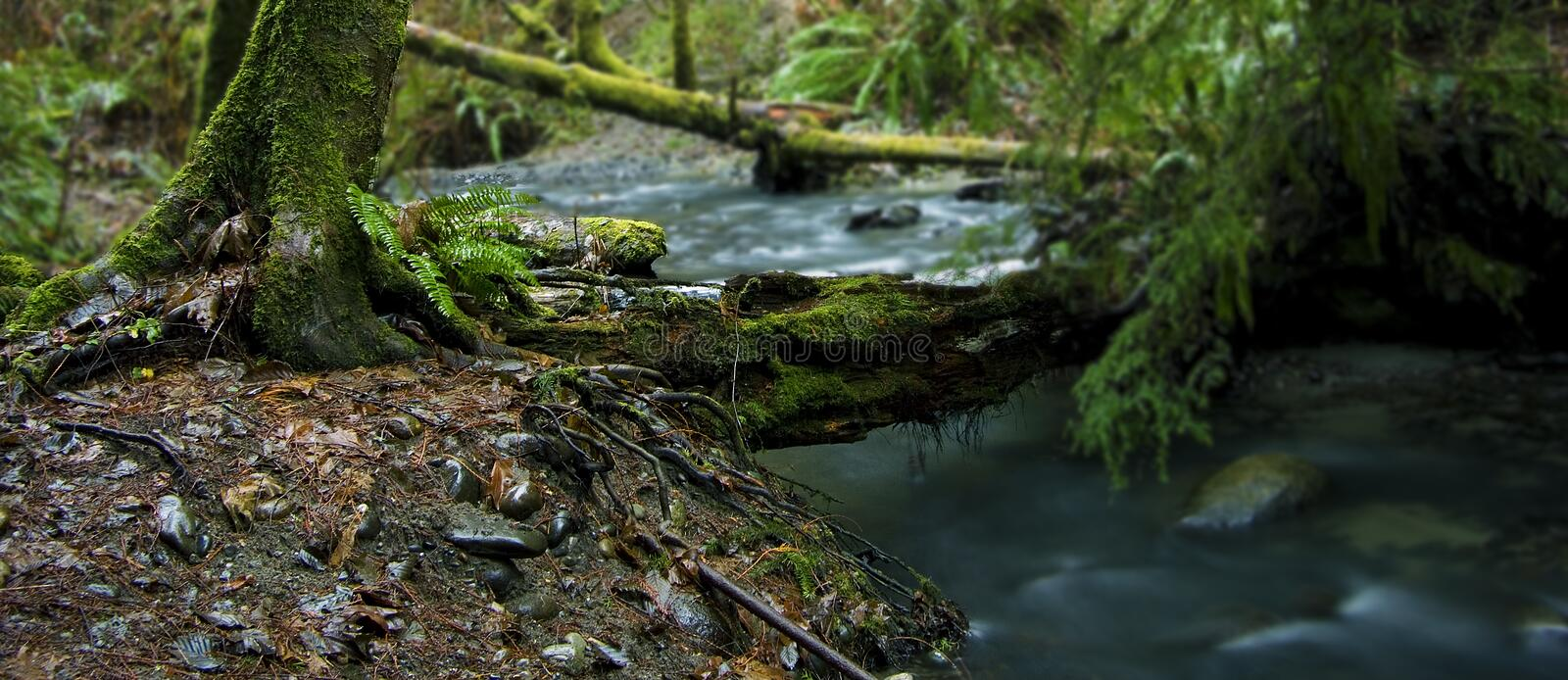 Download Forest Stream stock photo. Image of photography, forest - 1760152