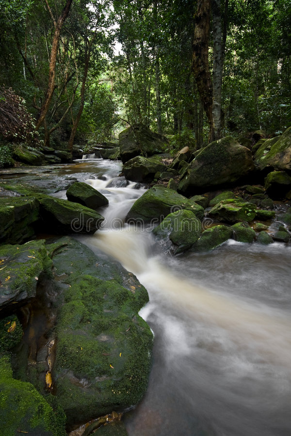 Forest Stream 2 royalty free stock image