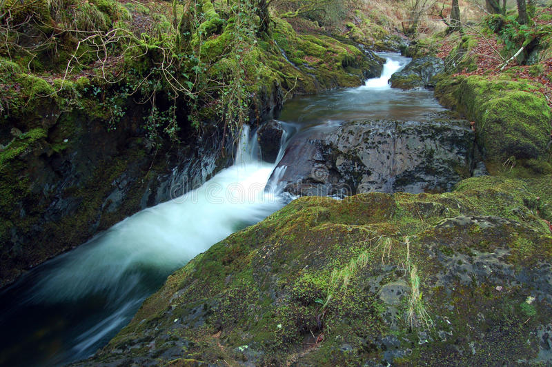 Download Forest stream stock image. Image of park, nature, country - 22773117