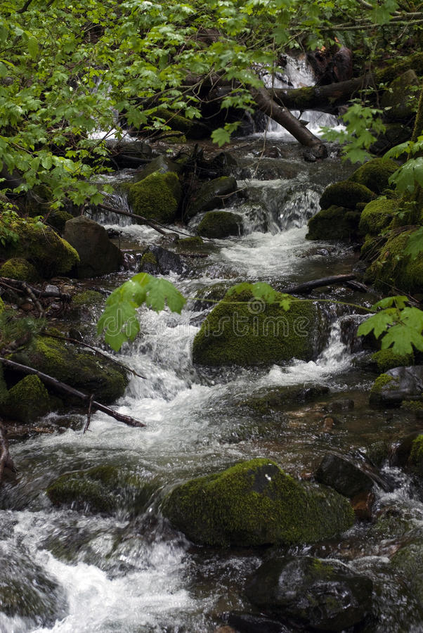 Download Forest Stream stock image. Image of calm, environmental - 25595309