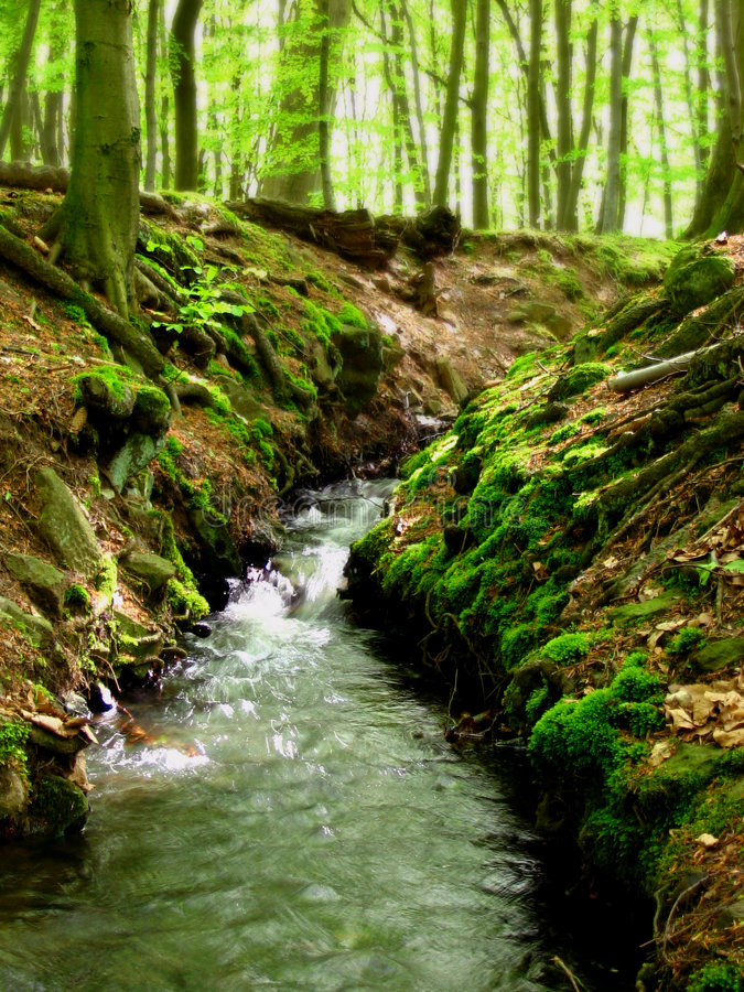Download Forest Stream Royalty Free Stock Photography - Image: 4473817
