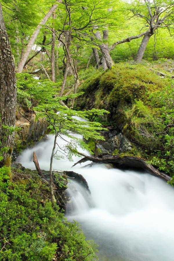 Forest Stream royalty-vrije stock afbeelding
