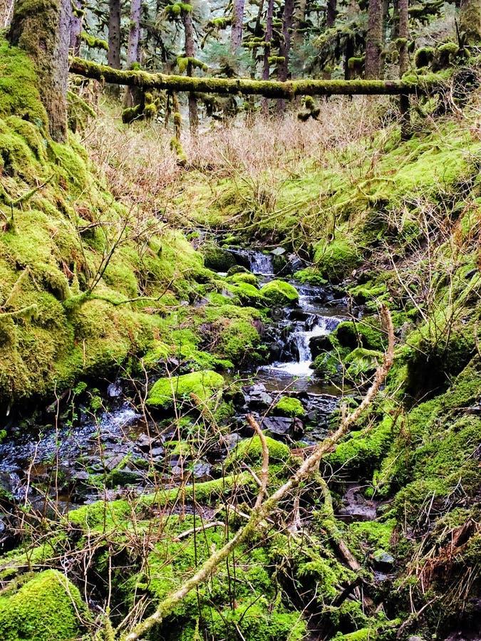Forest Stream immagini stock