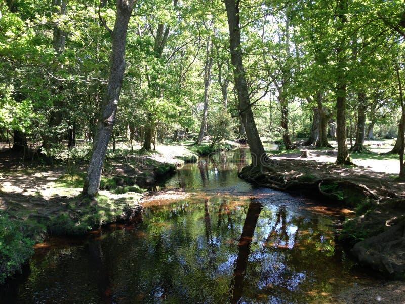 Forest Stream lizenzfreie stockfotos