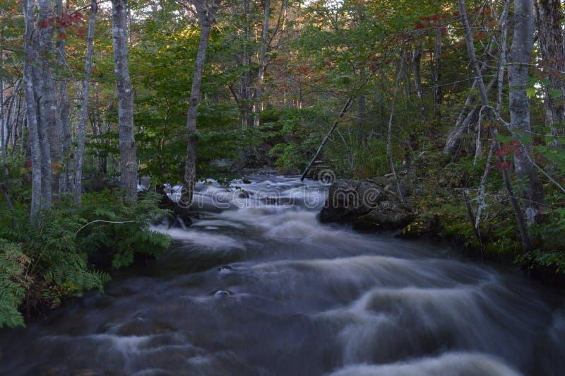 Forest Stream imagen de archivo