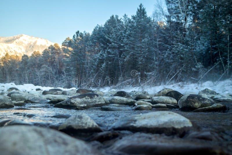 Forest Stream stockbild