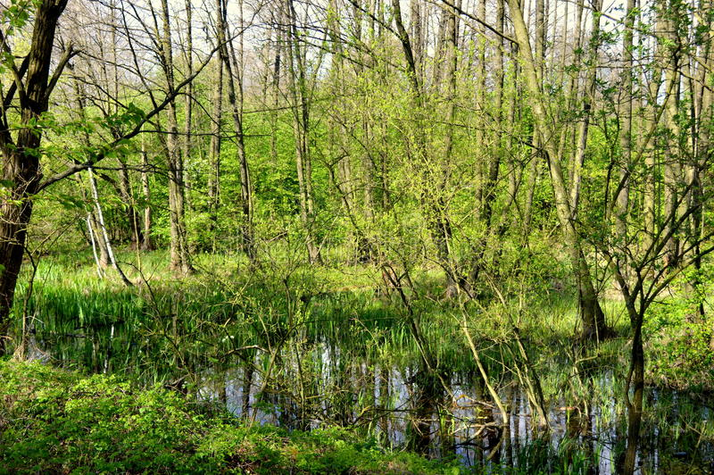 Forest Stream immagine stock libera da diritti
