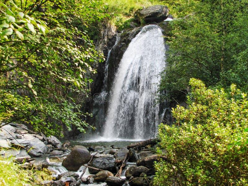 Forest Stream fotografie stock libere da diritti