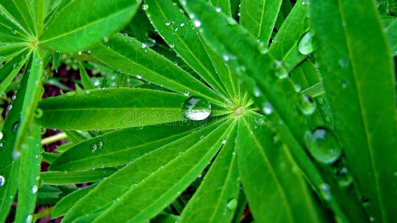 Forest Stream fotografia stock libera da diritti