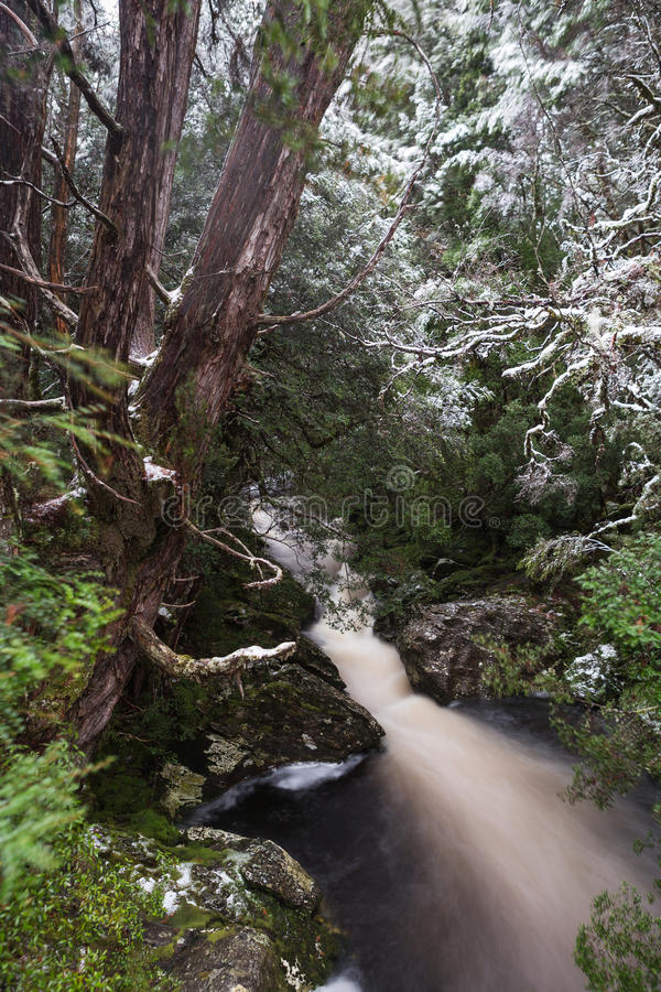 Forest stream along the Enchanted Walk in Cradle Mountain NP. A forest stream along the Enchanted Walk in Cradle Mountain National Park, Tasmania stock photos