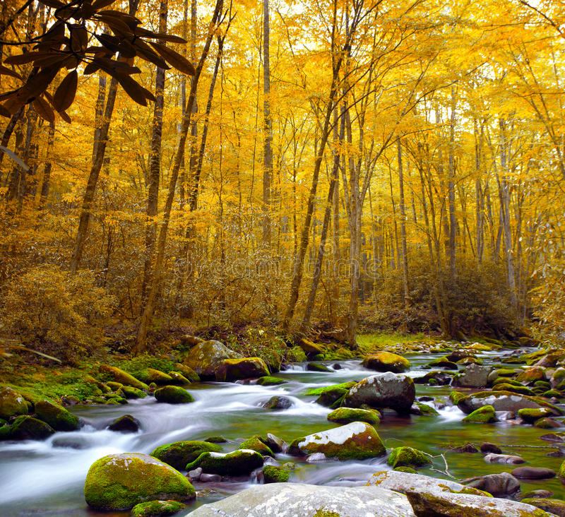 Forest Stream in Autumn royalty free stock photo