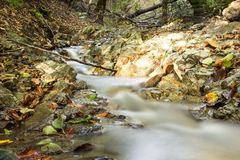Forest Stream in autunno immagini stock libere da diritti