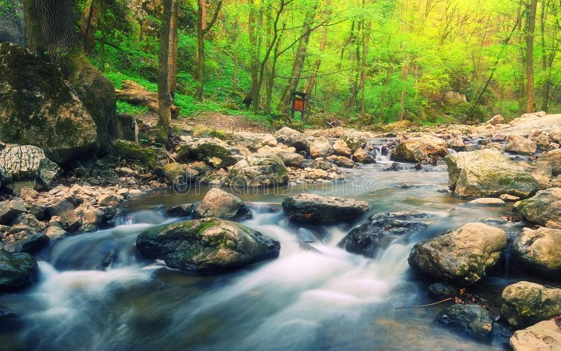 Forest stream, Cuha creek/brook in Bakony Mountains, Hungary royalty free stock images